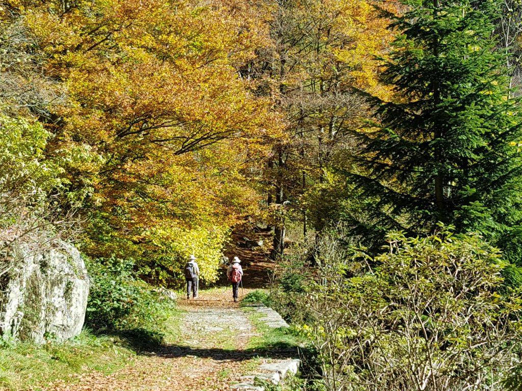 La passeggiata dei preti nel Foliage autunnale a Oropa